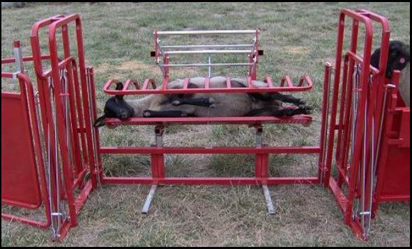 Ketchamu0027s Sheep Equipment