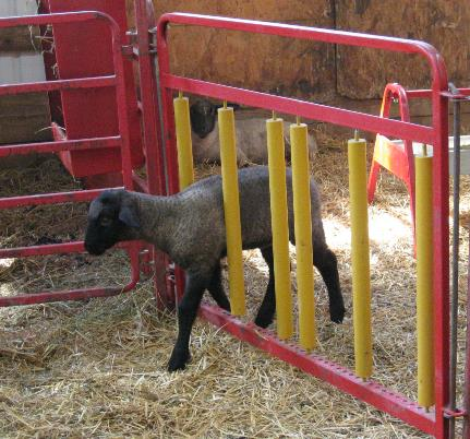 gate feeder creep feeders p sheep for sale