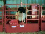 Head Gate Lambing Panel