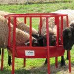 Feed hay & grain
