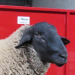 Ram Panel